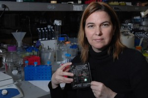 MIT Professor Angela Belcher and the prototype battery she and her team created using a genetically engineered virus.  Photo credit: Donna Coveney, courtesy of MIT