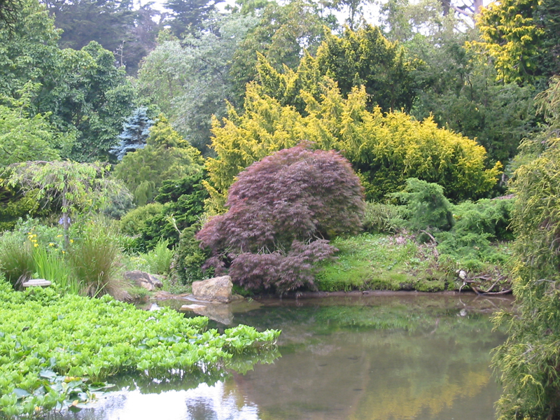One example of a complex adaptive system is the beautiful Japanese garden in Golden Gate Park.